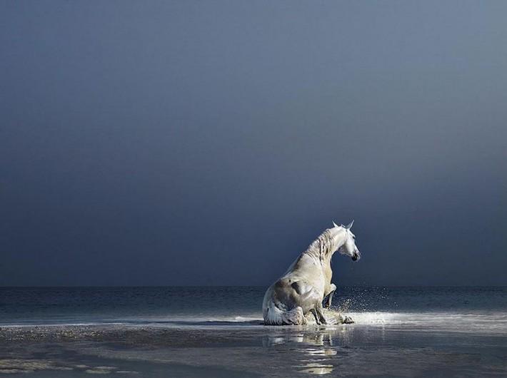 Фотопроект Equus: Красота Лошади