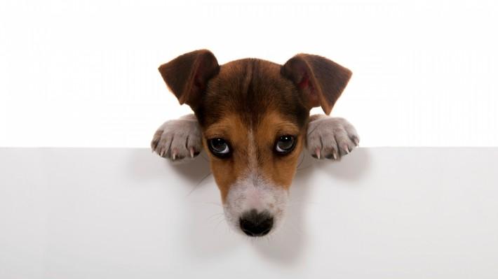 Красивые картинки на рабочий стол: Собачьи обои 1920х1080 :) (40 картинок)
