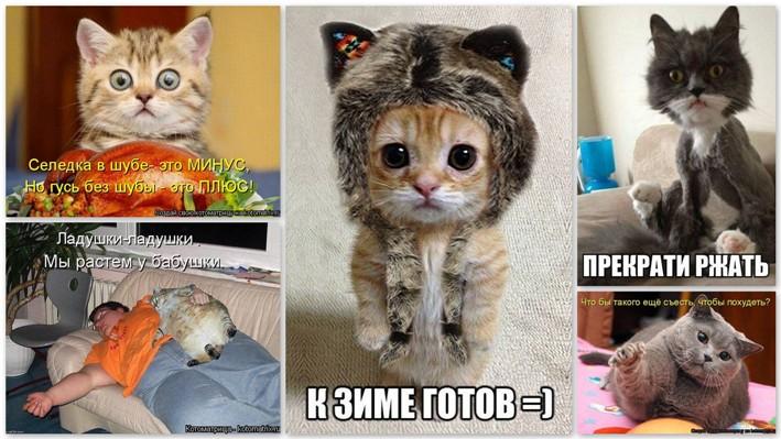 http://www.radionetplus.ru/uploads/posts/2014-01/1390078301_kotomatrix1.jpg
