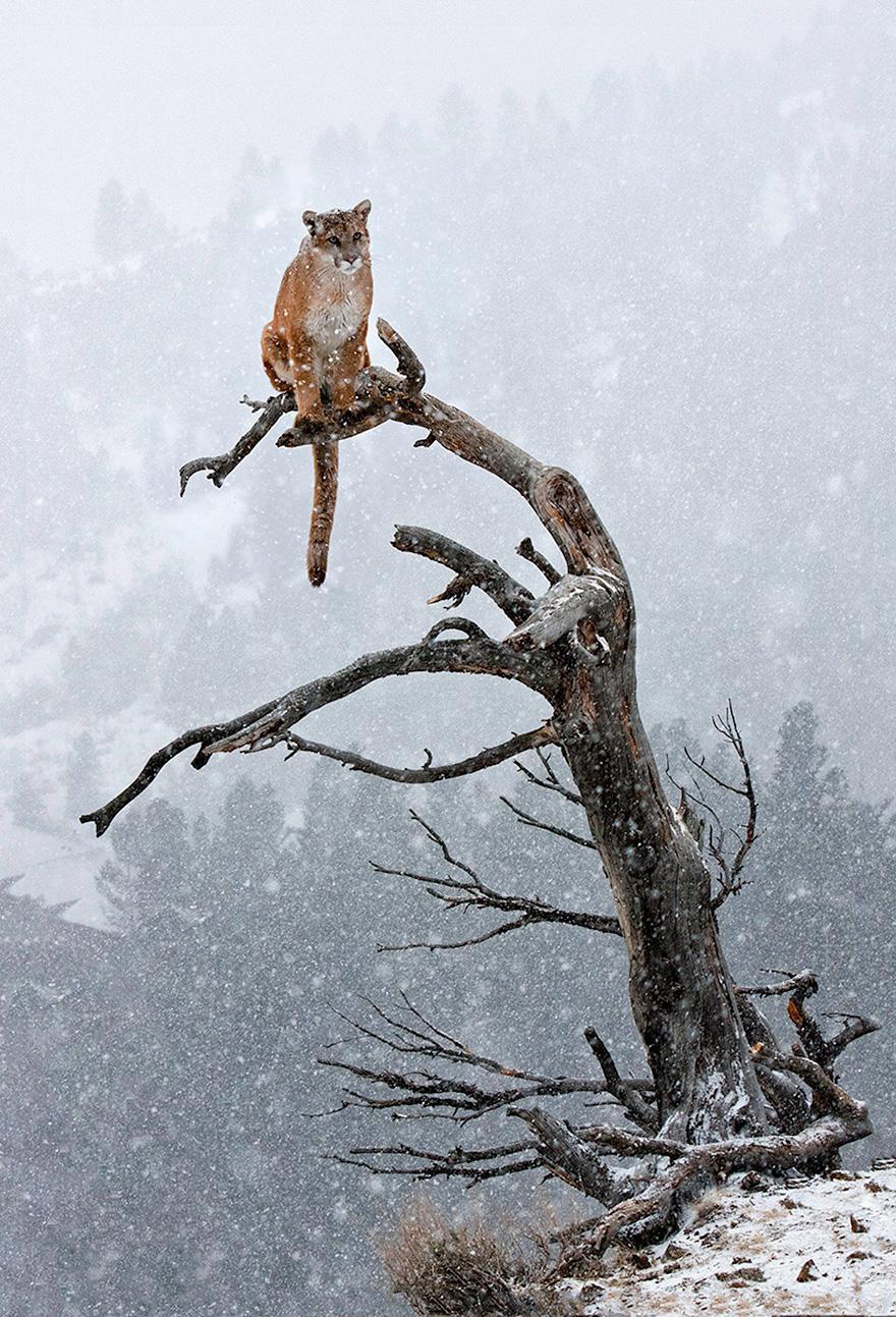Смешные картинки на телефон про зиму