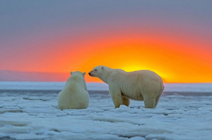 Закат на Аляске и белые мишки