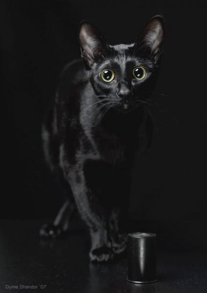 Черный-черный кот