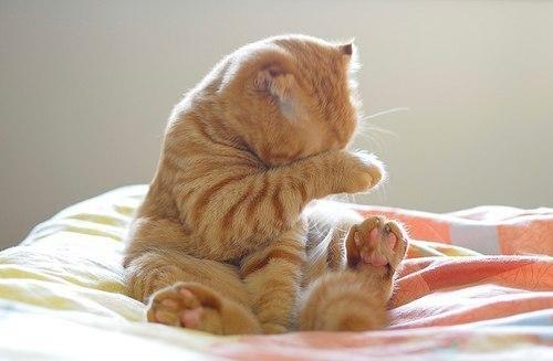 Рыжий кот умывается