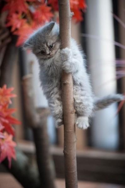 Котенок-скалолаз