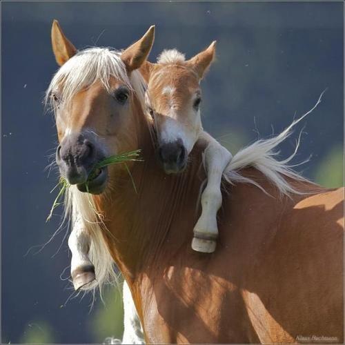 Мама-лошадь и жеребенок