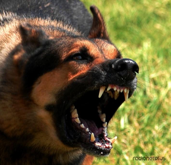 Что делать при нападении агрессивной собаки