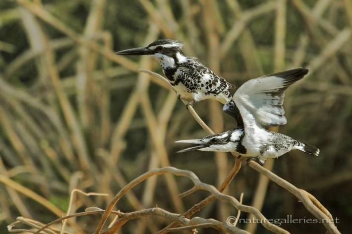 Удивительные снимки дикой природы Sompob Sasi-Smit (23 фотографии)