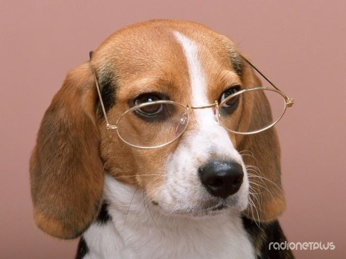 Почему собаки хорошо понимают своих хозяев?