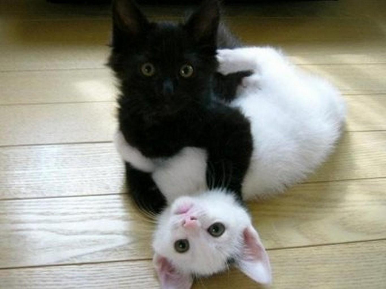 Игры чёрный кот белый кот