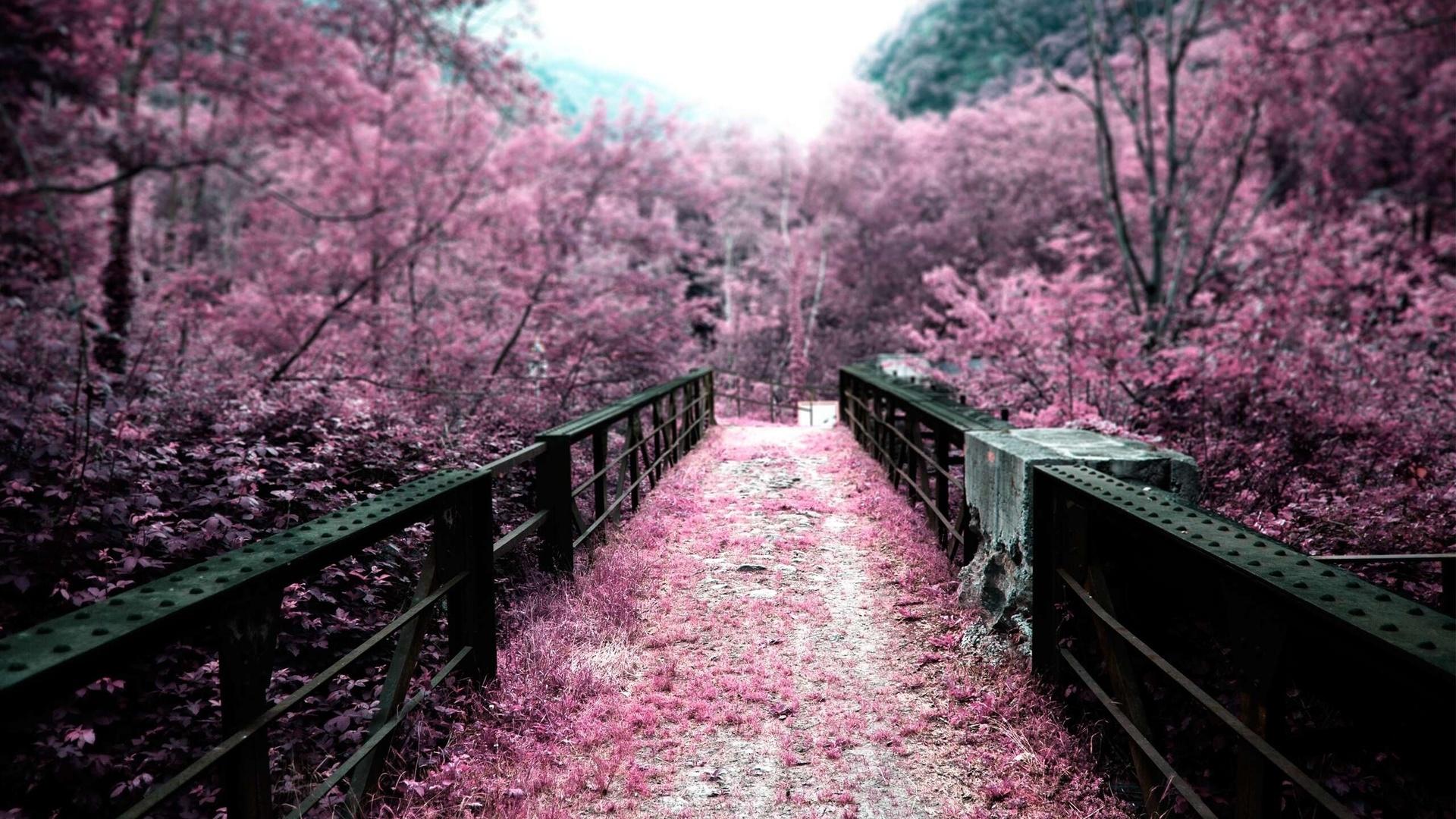 В Харькове может появиться сад сакуры, а в Японии — город-побратим Харькова (ВИДЕО)