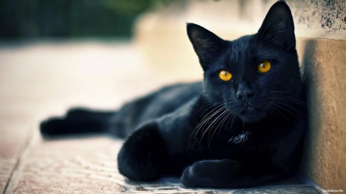 Как окрас кошки влияет на ее характер?