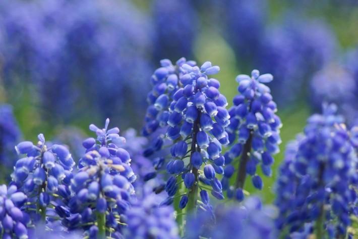 Красота цветов (36 фотографий)