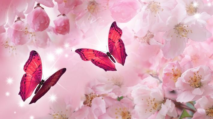 Красивые картинки на рабочий стол 1920х1080: Цветущая сакура (40 фотографий)