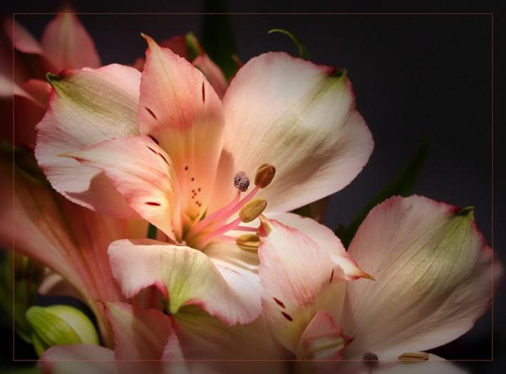 Цветы и нежность в фотографиях Angelika El.