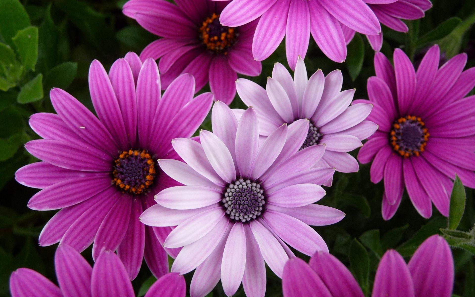 Цветы картинки 14k фото скачать обои