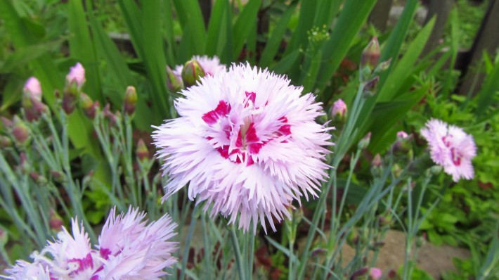 Какие есть цветы фото с названиями для дачи