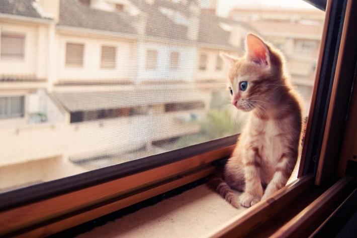 Кошка у окошка (31 фотография)