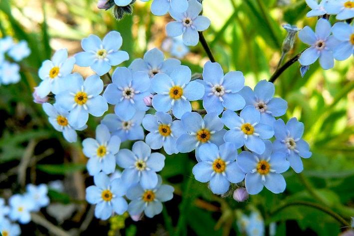 полевые цветы музыка в MP3  zaycevonline
