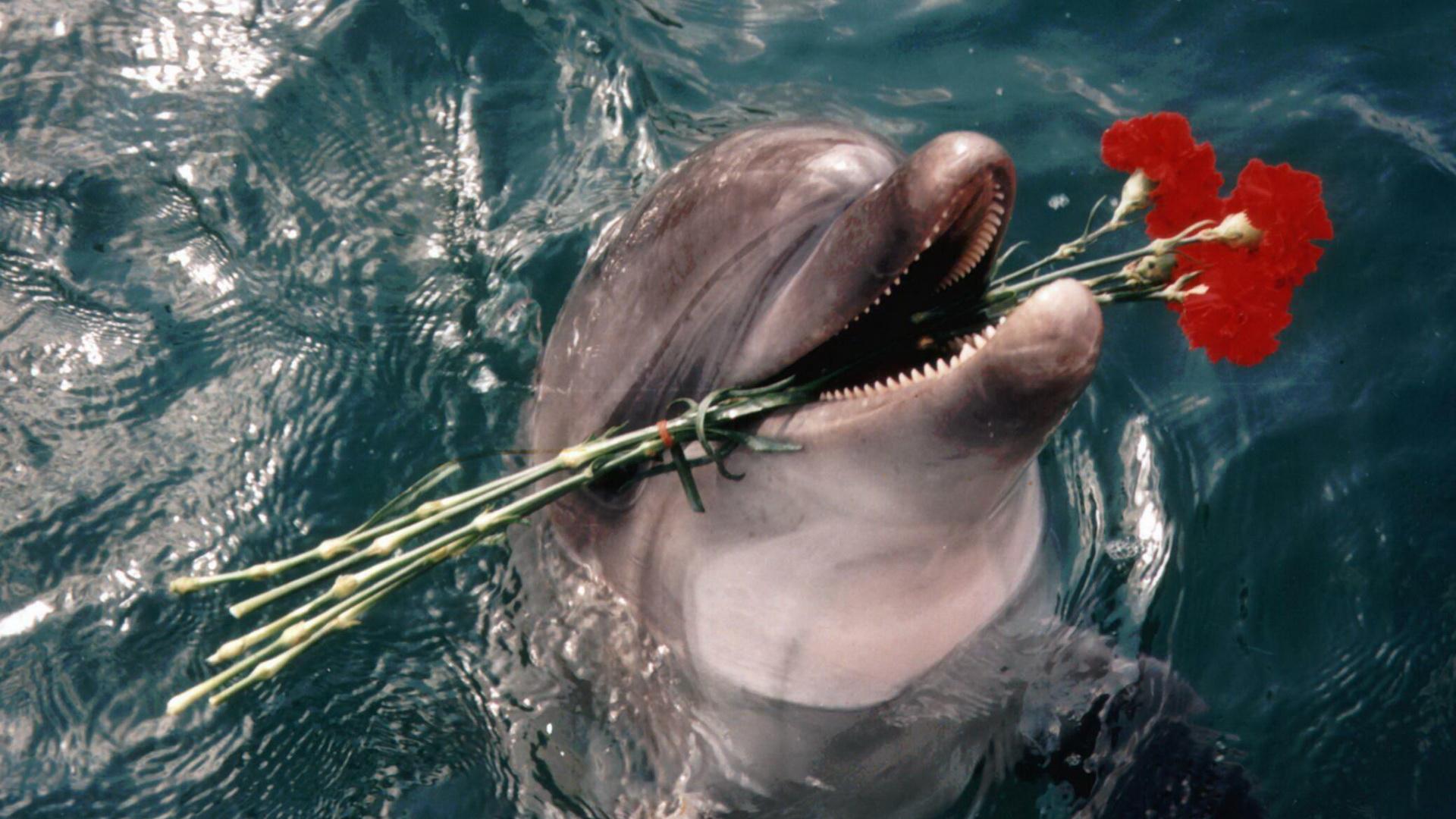Фото с дельфином и цветами