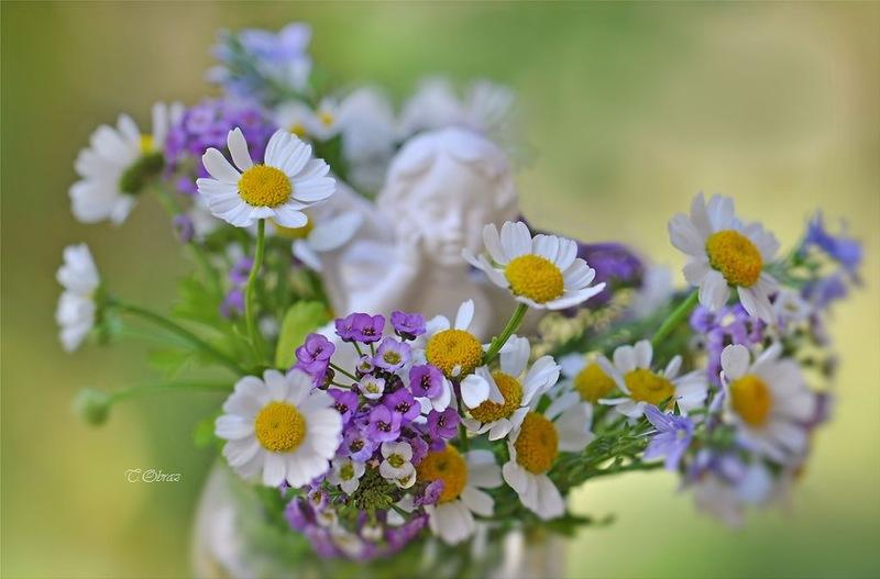 Фото нежное цветов