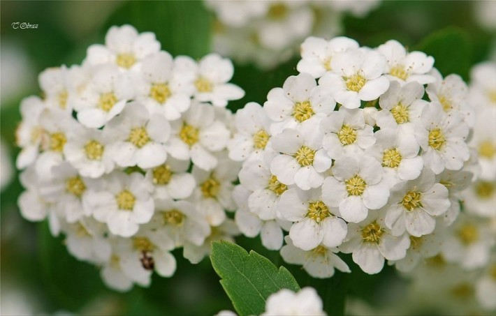Нежные цветы в фотонатюрмортах Татьяны Образ