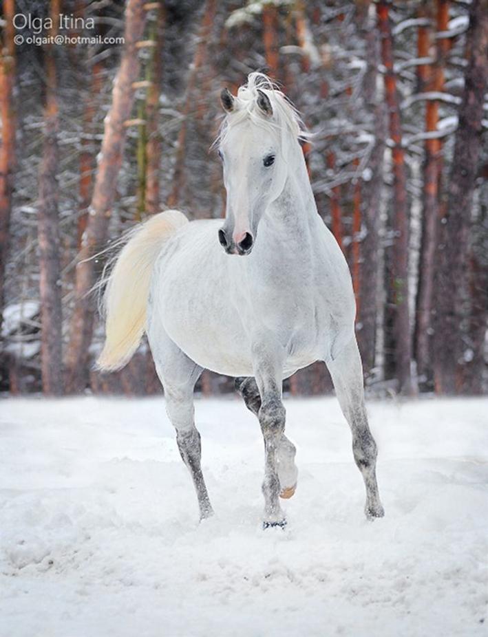 Лошади в фотографиях olga itina 31 фото
