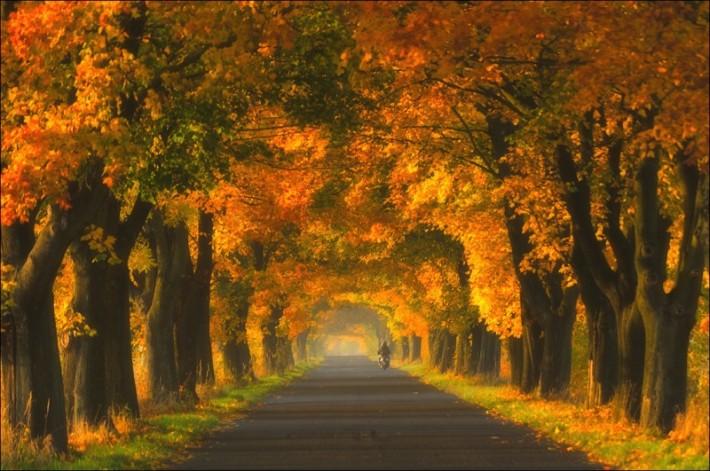 Осень фото пейзажей высокого - 962b