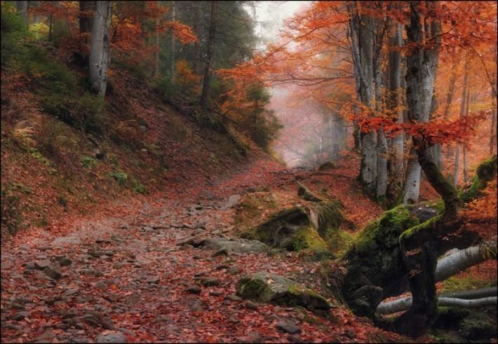 Осень фото пейзажей высокого - d4