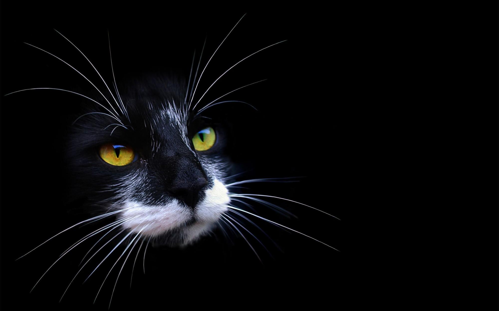 красивые картинки на рабочий стол.кошки