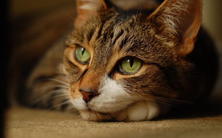Задумавшийся кот