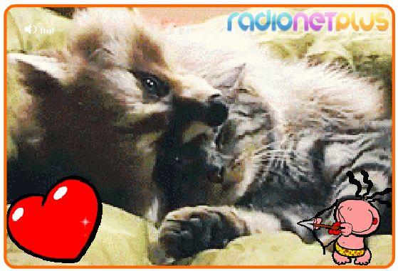 фото открытки любовные