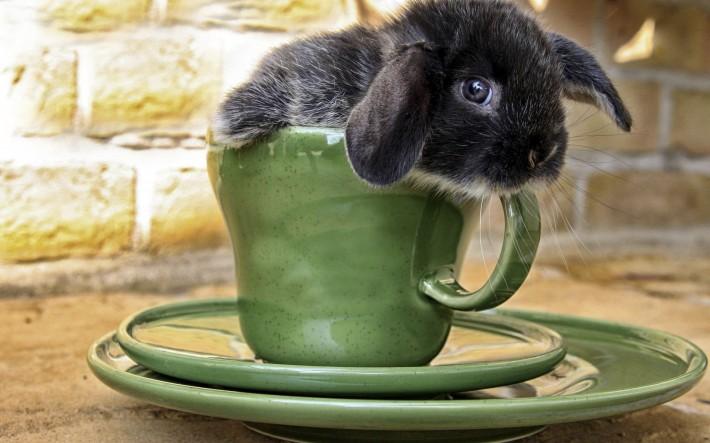 Кролик в кружке