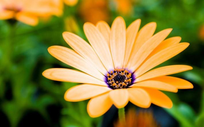 Желтый цветок