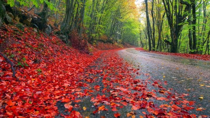 Дорога красные опавшие литься