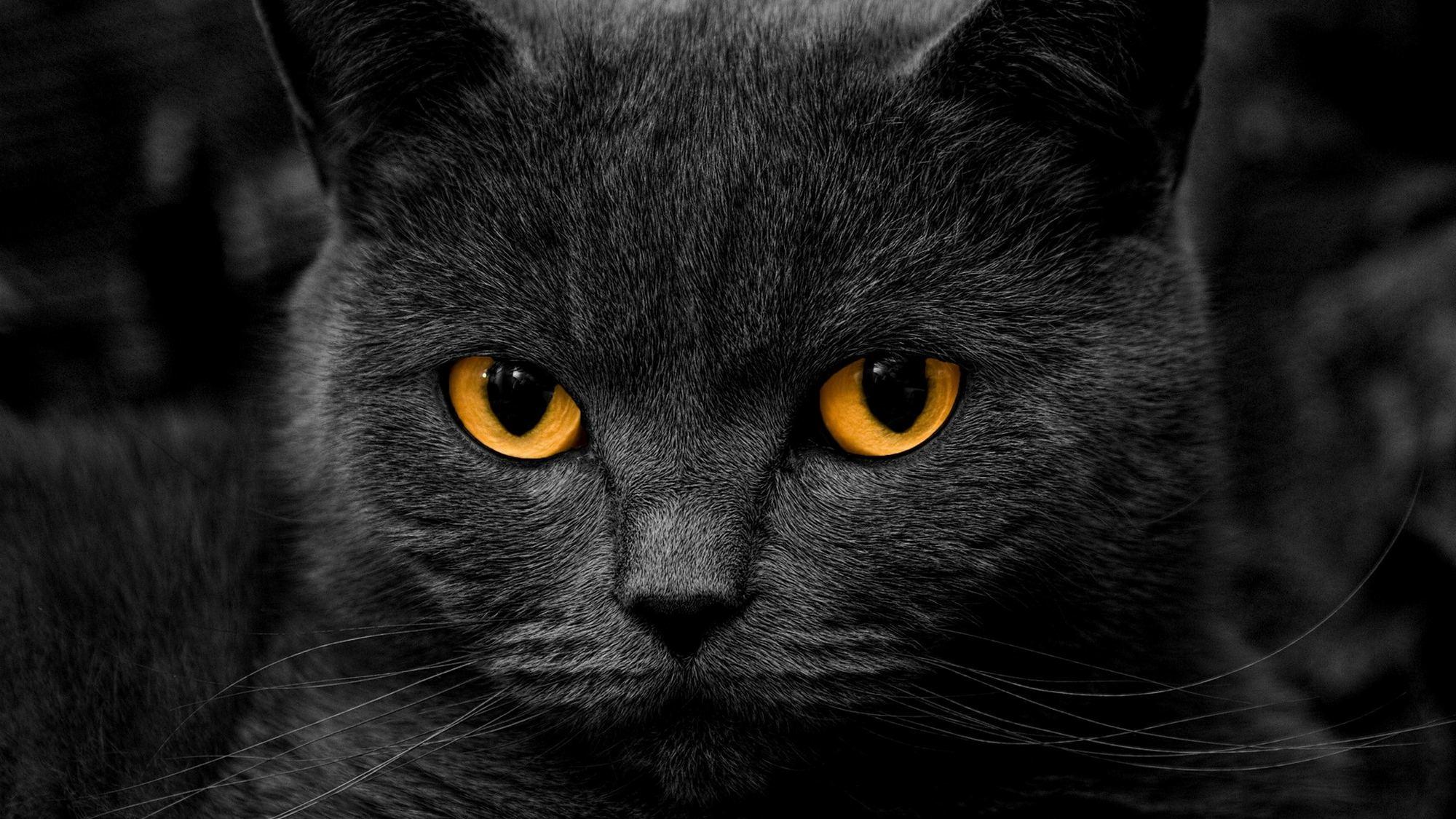 Картинка черного кота на рабочий стол