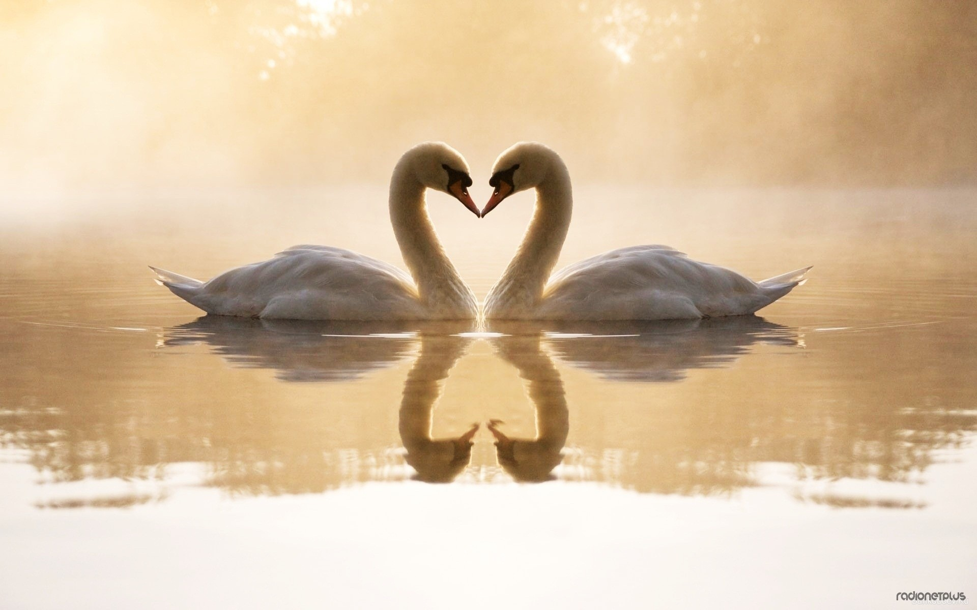 Картинки лето романтика лебеди на рабочий стол