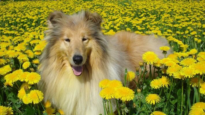 Красочные, нежные цветочно-весенние обои (19 фото) № 150408