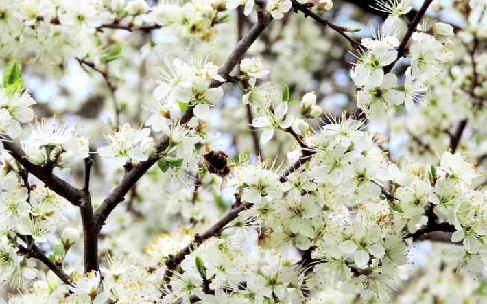 Весенние обои (15 фото) № 150412