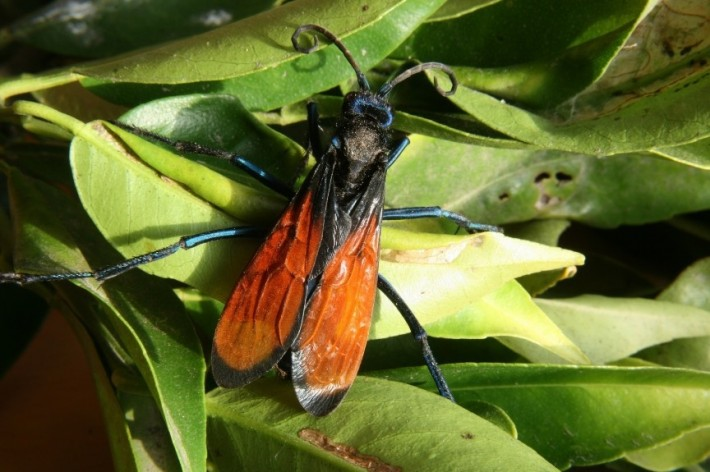 Кто из насекомых больнее всех кусается?