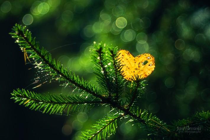 Осень в фотографиях Джони Ниемела