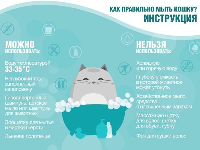 Как правильно мыть кошку