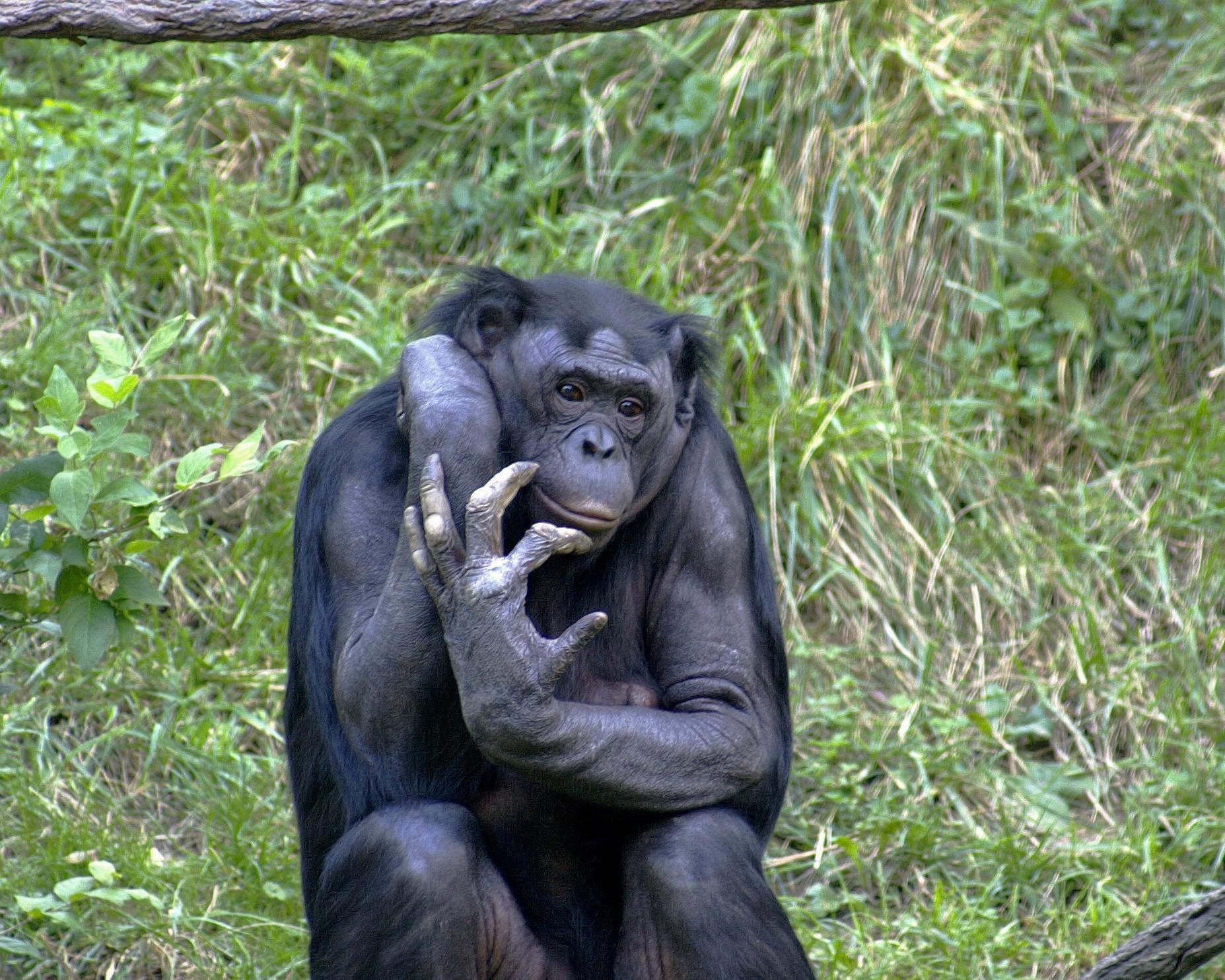 Секс с бабуином 1 фотография