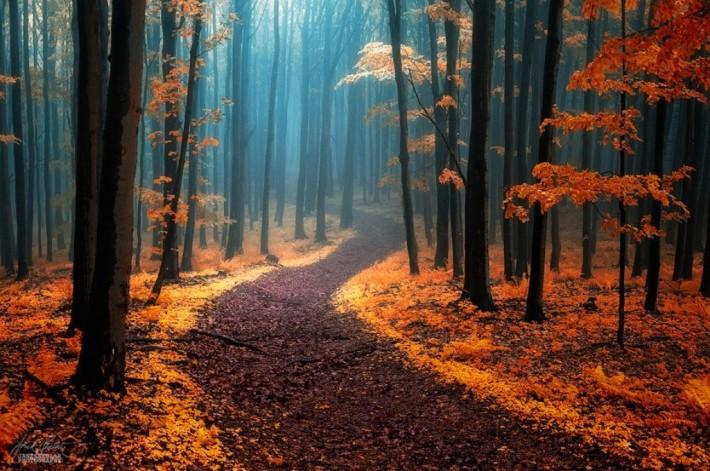 Красивые и интересные фотки. Осенние (25 штук)