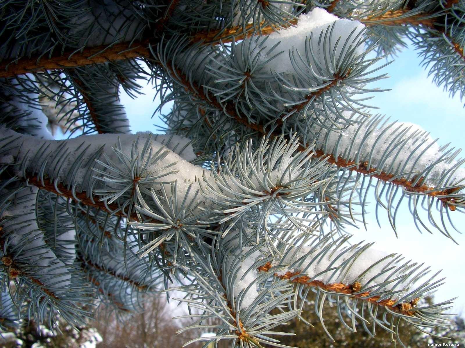 Картинка еловая ветка в снегу новогодние украшения на
