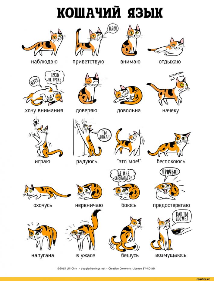 Иллюстрации помогут понять кошек и собак