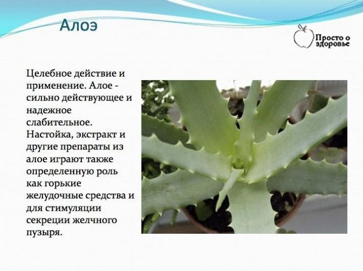 Все о лекарственных растениях.
