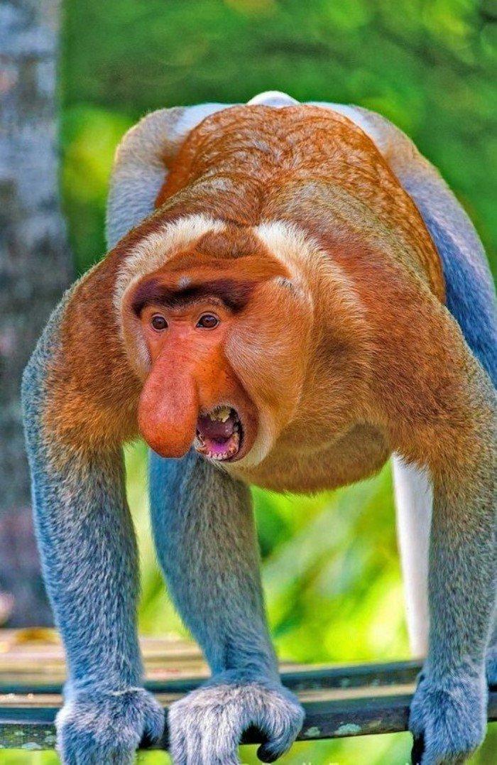 Секс в стаде обезьян видео