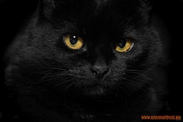 Кошки и котята :) (54фото)