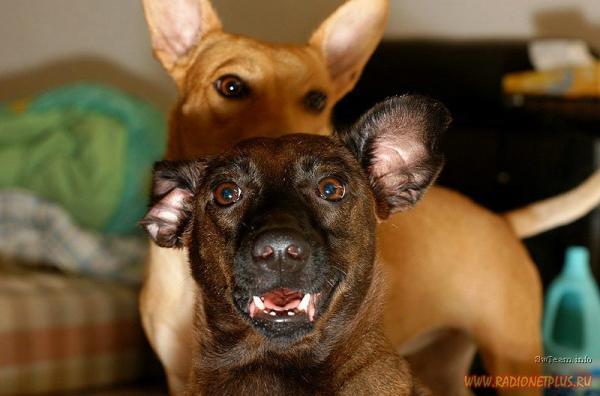 Для всех, кто любит собак! (30 фото)