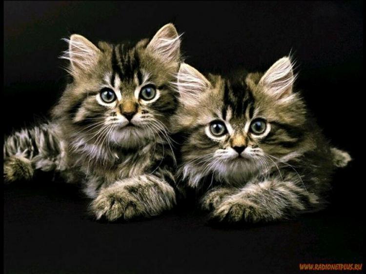 о кошках, | Записи в рубрике о